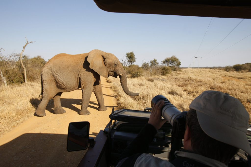 Charity CEO warns of the impact of Covid on conservation in Africa