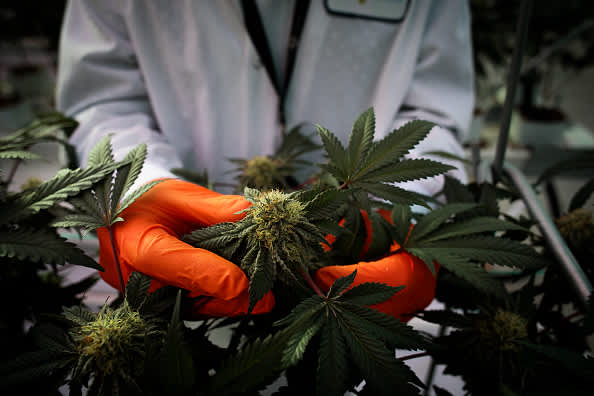 Cannabis stocks soar as Reddit crowd that spiked GameStop jumps in, Tilray surges 25%